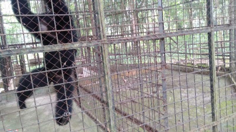 Pengunjung Kebun Binatang Medan Berkurang, Ini Alasannya