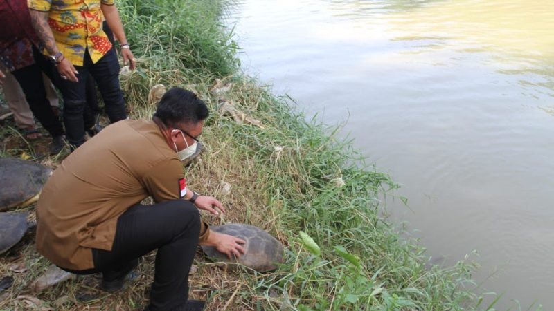 Hari Sungai Sedunia, Wagub Banten Lepasliarkan Kura-kura ke Cisadane